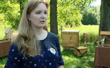 Nieoceniona rola pszczół w ekosystemie